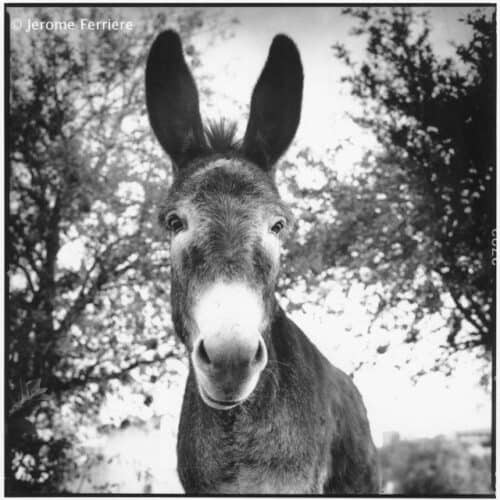 The Donkey Ibiza Portraits coffee table book by Jérôme Ferrière